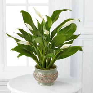 season plant